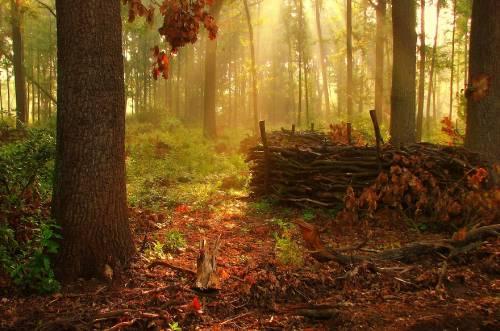 Картинка осенний лес - 8a
