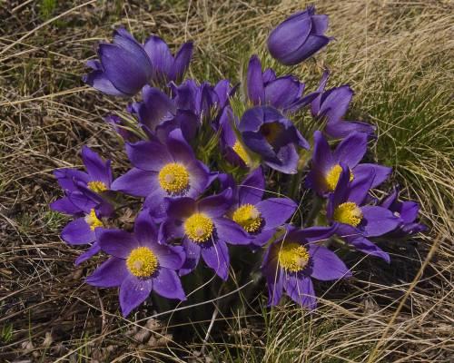 Главная фото обои цветы летние цветы