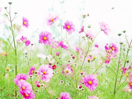 Главная фото обои цветы полевые цветы