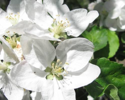 Фото обои цветы классные белые цветы