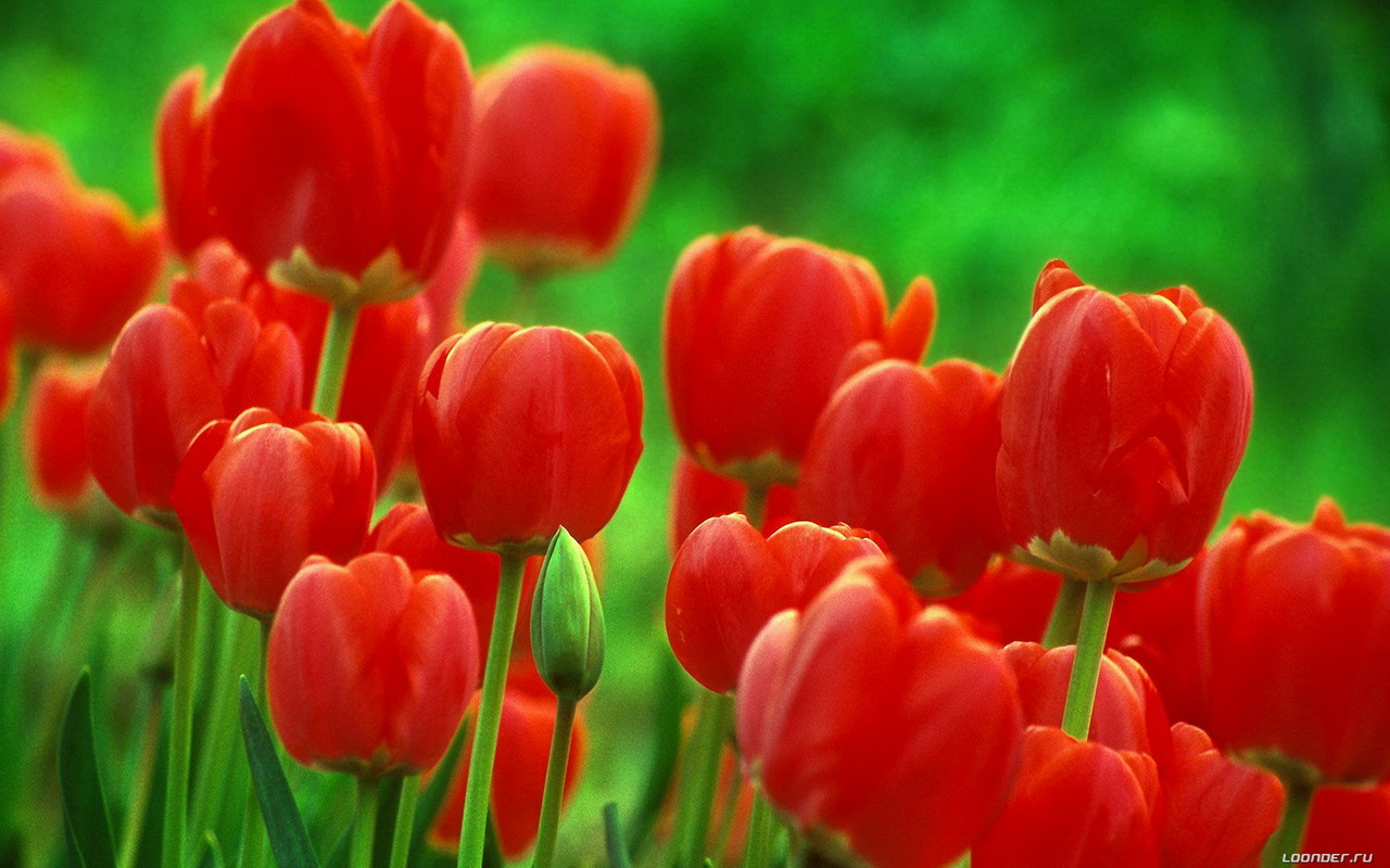 Цветы красивые картинки для рабочего