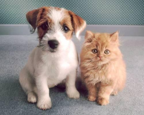 Красивая картинка Два маленький - кот и собака на рабочий ...