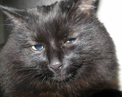 Красивая картинка грустный чёрный кот