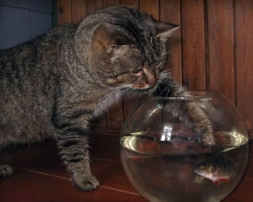 ловить рыбку в аквариуме