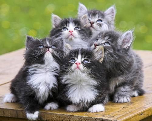 Маленьких котиков на рабочий стол