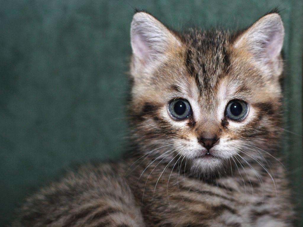 Подвижный кот