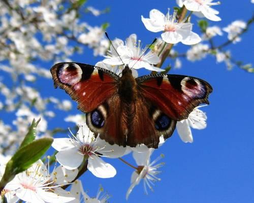 Бабочка ранней весной на рабочий стол